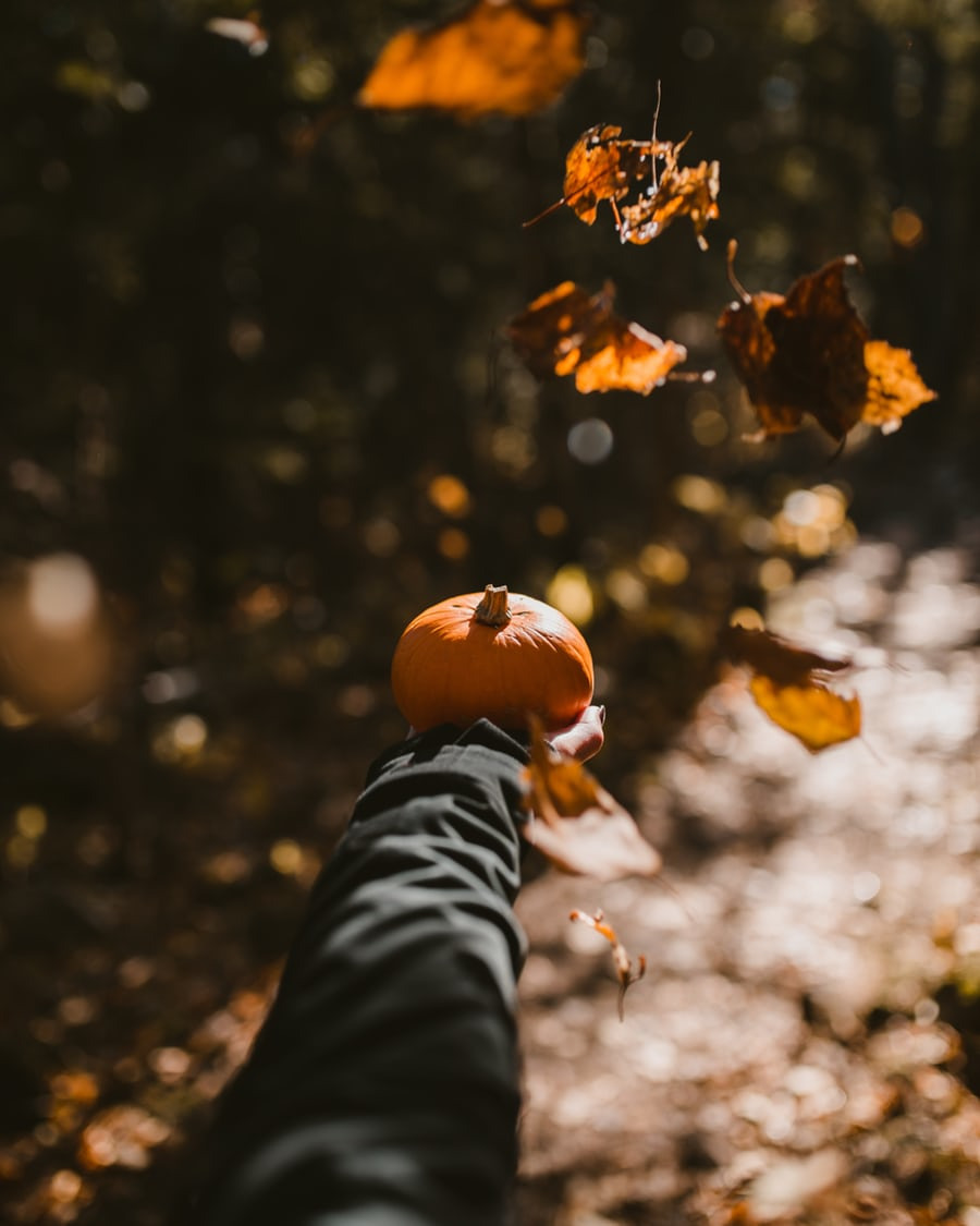 Fun fall activities for adults and kids alike in Minnesota